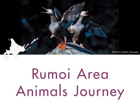 Rumoi Area Animals Journey