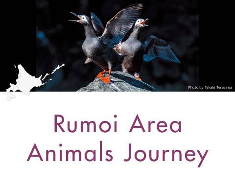 Rumoi Area Animals Journey