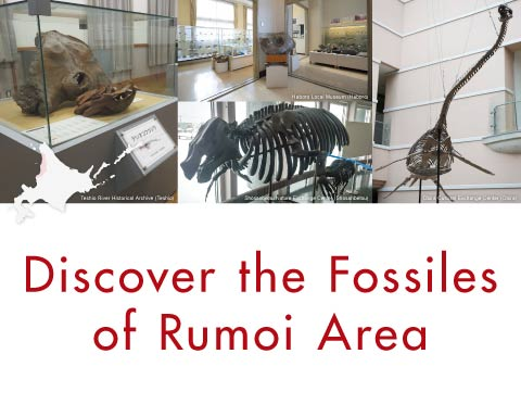 Discover the Fossiles of Rumoi Area